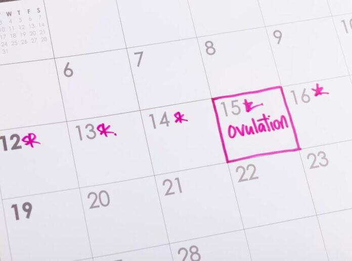 Calcolo giorni fertili: per rimanere incinta, donne, quali sono i giorni fertili