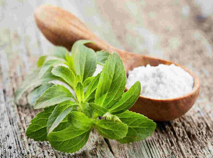 Stevia: controindicazioni, valori nutrizionali, è cancerogena